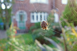 a spider in a web that will be removed professionally by a pest control specialist