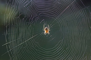a spider in a web that will be removed through professional Massachusetts spider control