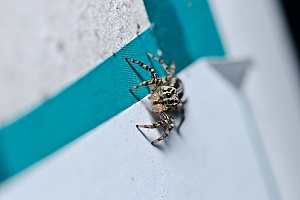 a spider that will be removed by a Lakeville, MA pest control professional