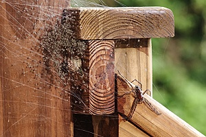 a web full of eggs laid by a spider that will be removed from a deck